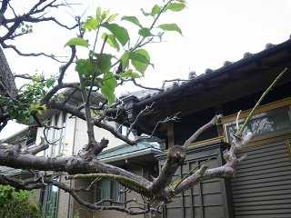 葉が出た枝